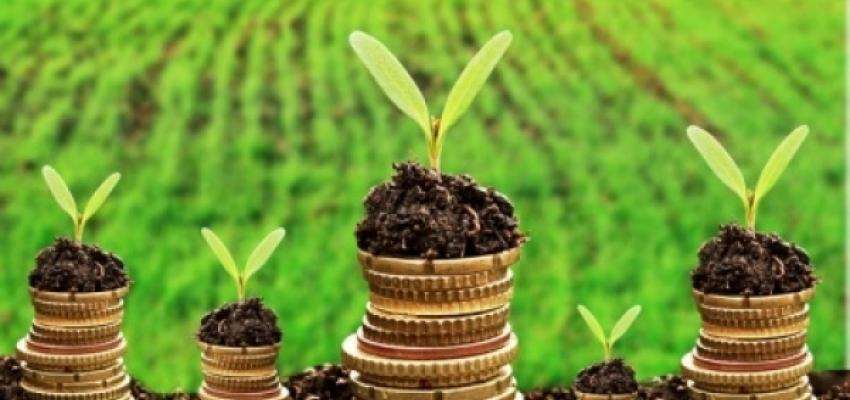 Єдиний податок 4 групи: НГО сільгоспугідь