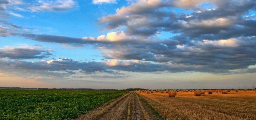 Оренда земельних ділянок самозайнятими особами