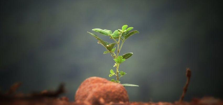 Закон про удосконалення земельних відносин у дії