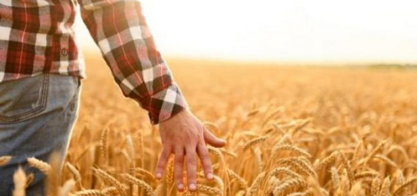 Новий закон про Державний аграрний реєстр і держпідтримку агросектору